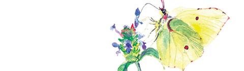 chronique, naturaliste, tarn, garrigues, 81