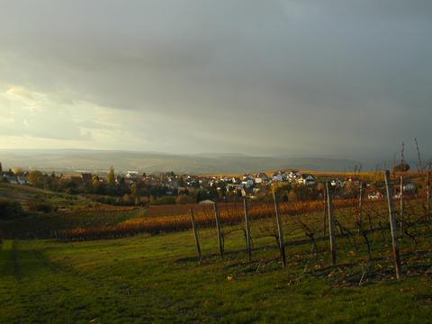Horrweiler im Herbst nach der Weinlese.