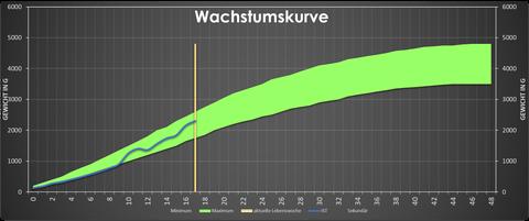 Wachstumskurve (grüner Bereich: So sollte sich das Tier entwickeln, blaue Linie: Aktuelle Entwicklung des Tieres, gelbe senkrechte Linie: Aktuelle Messwoche)