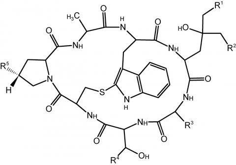 Grundstruktur (Main Structure) der Phallotoxine