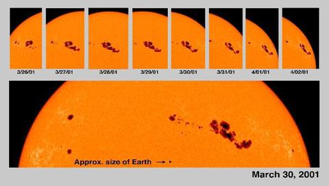Sonnenflecken - auch im Größenvergleich mit der Erde (Bildquelle NASA)