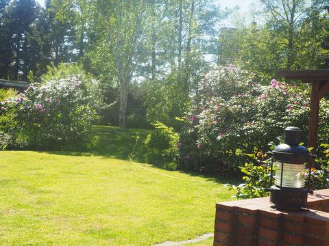 Blick in den Hintergarten