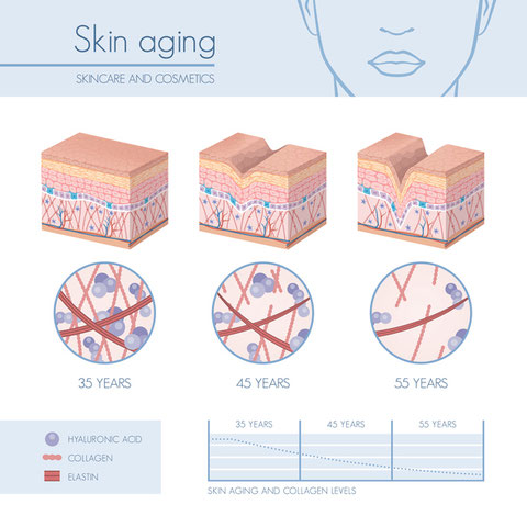 皮膚の老化現象