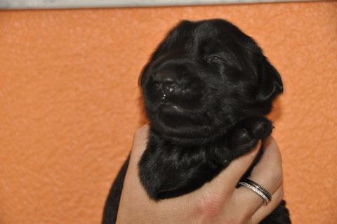 Herr Rot hat als erster die Augen geöffnet - Hallo Welt :-)