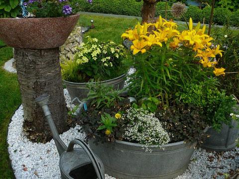 Zinkgefasse bepflanzt Kiesbeet