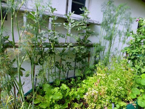 Kräuter und Gemüsepflanzen im Hochbeet