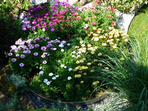 saisoal bepflanzter Edelstahlkreis mit Bornholm-Margariten