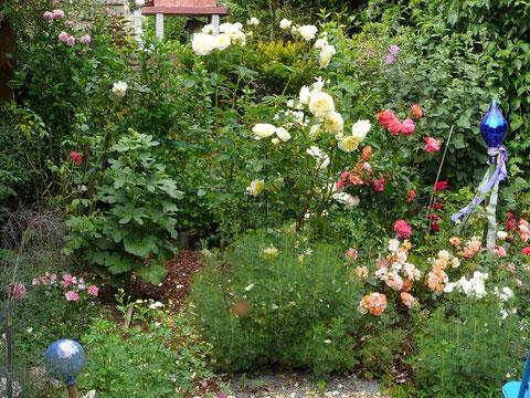 Kräuterhecke, Bodendecker- und Englische Rosen
