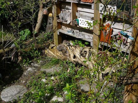 Altholz-Stamm vor dem Insektenhotel