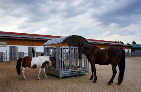 3 Pferde und Heuraufe