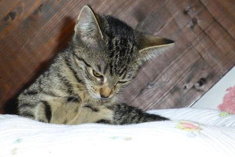 Sandra - Katze aus Lövenich