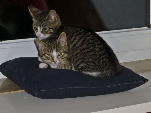 Millie & Max lieben den Fensterplatz