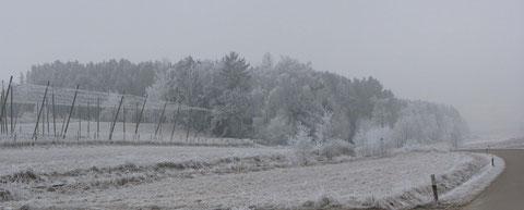 Winterlandschaft (bei Rudelzhausen, Lkr. FS)