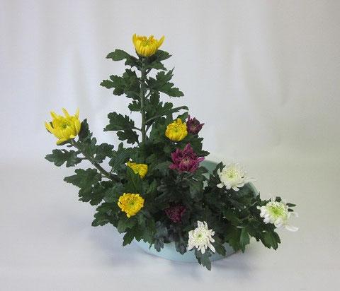 2013.12.16 菊の三種挿し            by Kumiさん