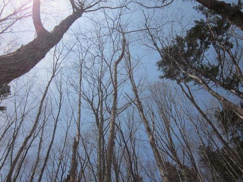 2013.5.14 近郊の山々の春、生命の息吹!
