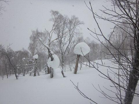 2014.3.22 どことなく可愛らしい雪景色<その1>     奥手稲山にて