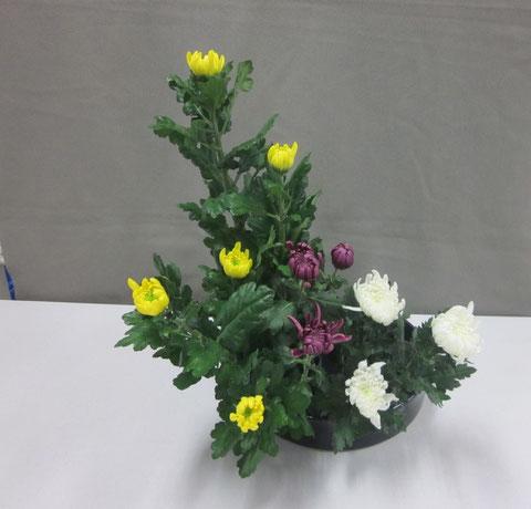 2011.11.14 菊の三種挿し  by Yumiさん