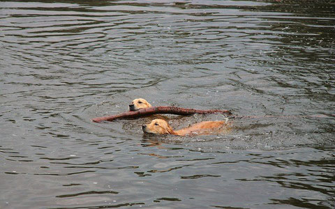 Urlaub mit Hund, See, Rheinsberger Seenlandschaft, Kagar