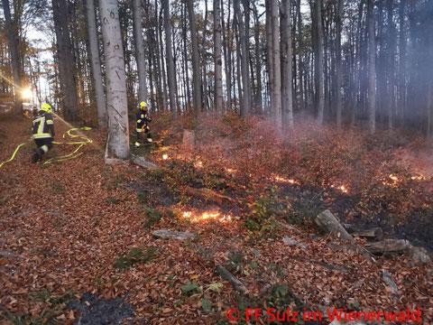 Feuerwehr; Blaulicht; BFKDO Mödling; FF Sulz im Wienerwald; Waldbrand; Pilot;