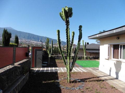 Rechts im Bild sieht man das Chalet zur Langzeitmiete und im Hintergrund ist der Garten und der Teide von Teneriffa zu sehen.
