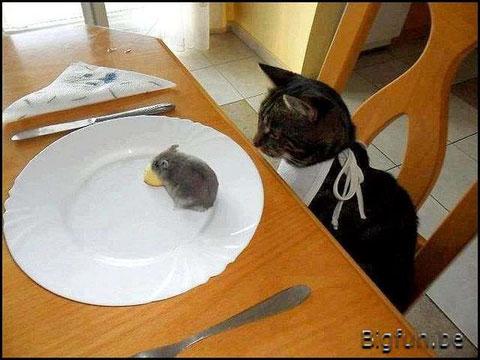 Esperando que el ratón acabe con la comida....que tal