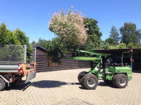 Warum nicht auch die grünen Freunde des Gartens mit ins neue Eigenheim nehmen..