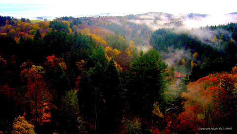 Herbstwaldnebel