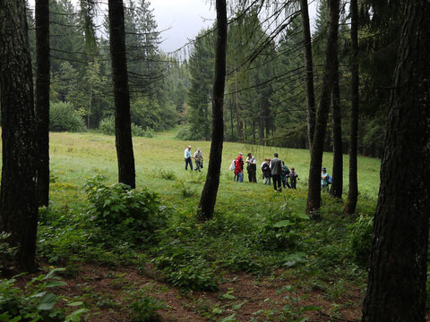 Escursioni alla ricerca di funghi