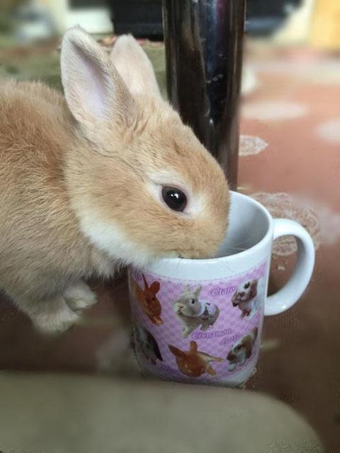 うさぎづくしマグカップ 写真