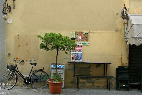 in Arezzo