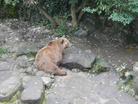 Gli orsi nella fossa del castello di Český Krumlov.
