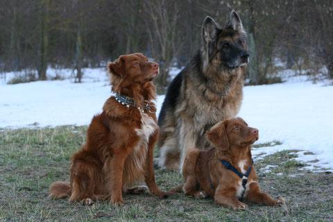 Auch ein schönes Trio