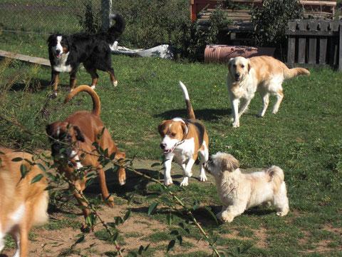Soziale Hunde sorgen für ein harmonisches Miteinander