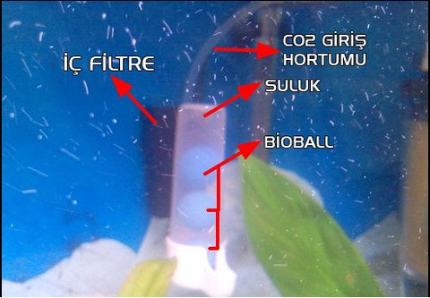 akvarryum için mayalı karbondioksit üretici yapımı