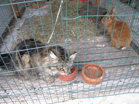 sie sieht auch gerne mal bei den Kaninchen vorbei