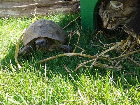 auch bei Schildkröte Felix schaut sie mal rein