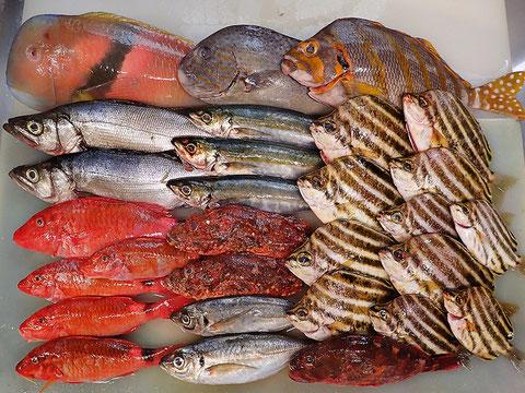 寿司ネタ 魚 出前