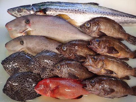 新鮮な地魚で 美味しいお寿司をデリバリーします