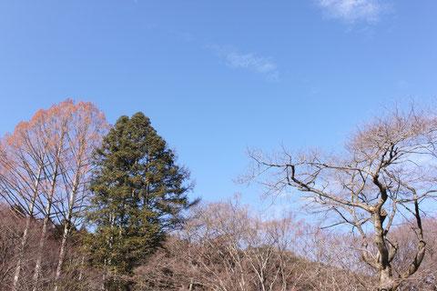 小鳥の森方面 空