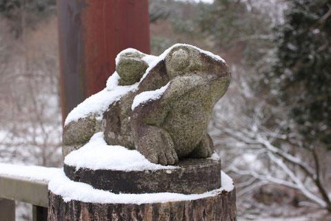 積雪 カエル