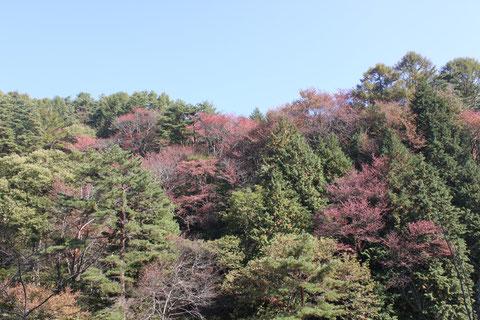 野底山森林公園 紅葉