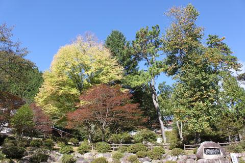 野底山森林公園 紅葉 サクラ カツラ