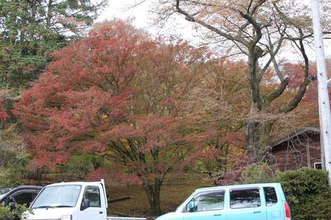 野底山森林公園 もみじ紅葉