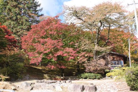 野底山森林公園 紅葉 もみじ