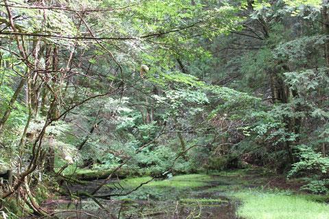 野底山池の平 モリアオガエルの繁殖地