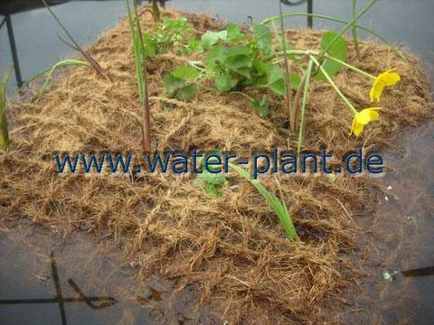 bepflanztes Pflanzkissen mit Xylit