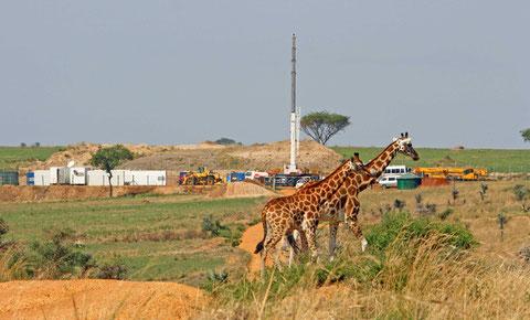 Los grandes mamíferos son los más vulnerables a las actividades humanas. / Fotp: Paul Mulondo / WCS