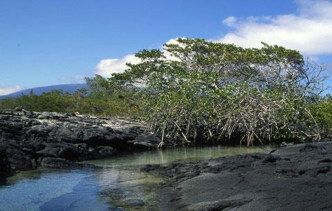 Islas Galápagos. Patrimonio Natural de la Humanidad. ©Foto: M. Belenguer