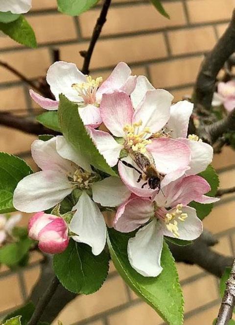 Eine Biene bei der Nektarsuche