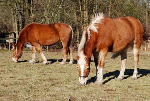 Auch Pferde gehören zum Biologiezentrum